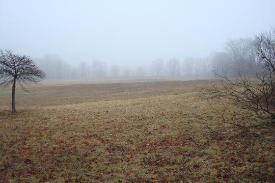 Misty field