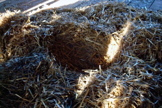 Straw nest