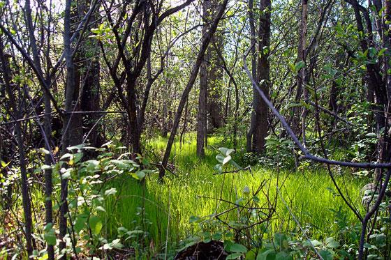 Grassy grove