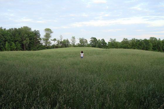 Walking in the hayfield