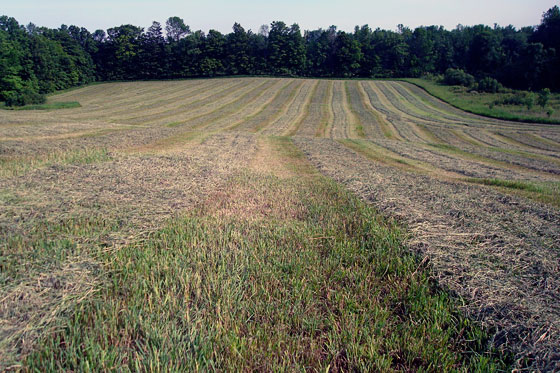 Field of freshly mowed hay