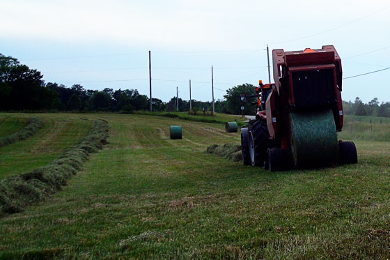Fresh hay bale coming out of the baler