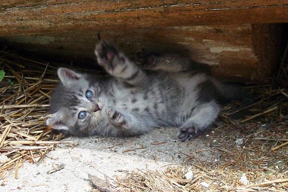 Kitten lying on its back