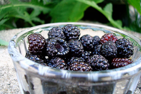 Bowl of black raspberries