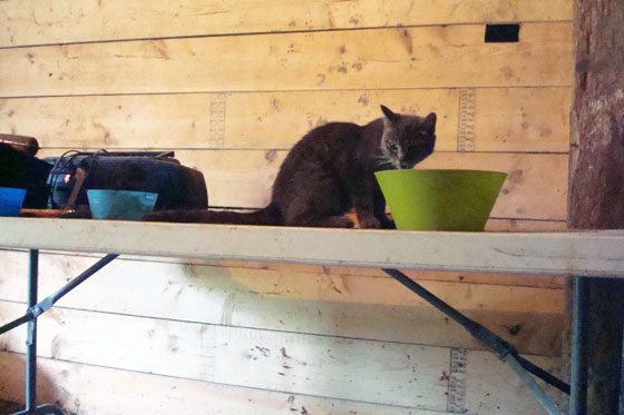 Cat at food dish
