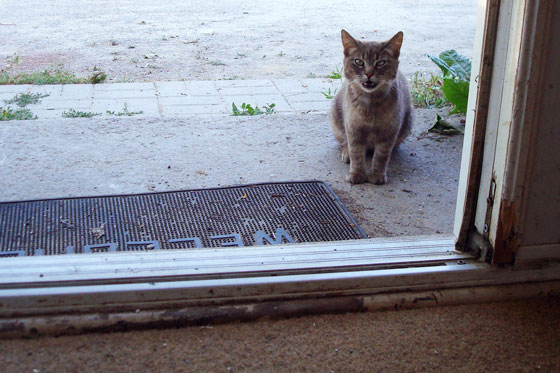 Cat at the front door