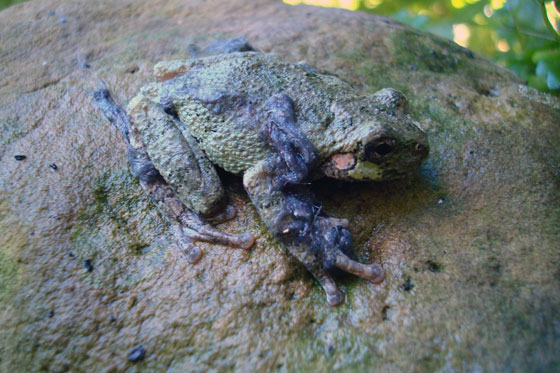 Toad on a rock