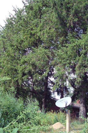 Satellite dish on a post