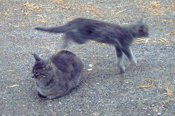 Kitten jumping over a cat