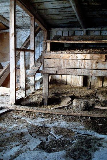 Broken concrete in a chicken coop