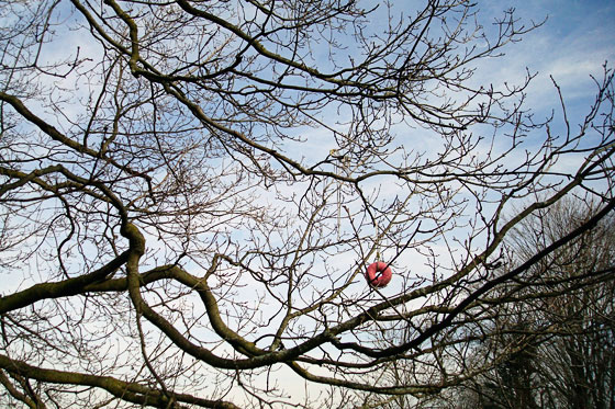 Pink doughnut hanging in a maple tree