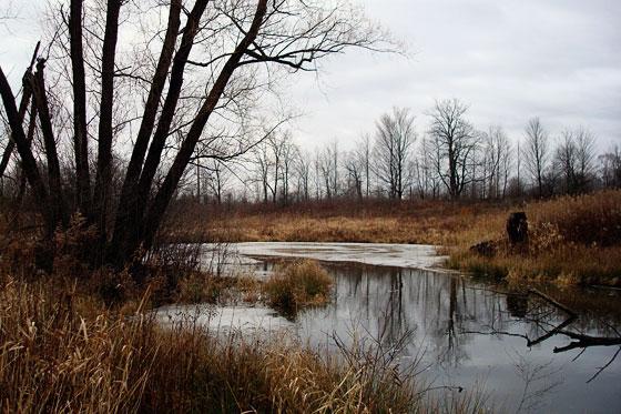 Melting ice on a pond