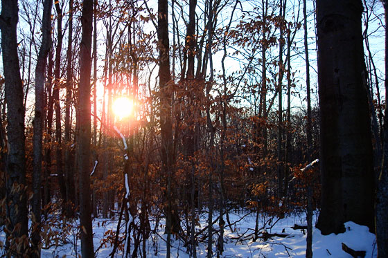 Setting sun in a winter forest