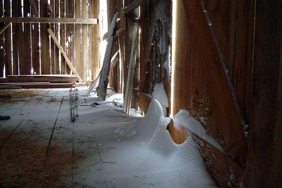 Snow drifts inside the barn