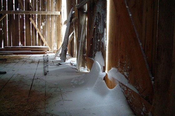 Snow drifts inside the barn