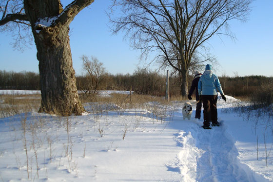 Snowshoeing along a winter trail