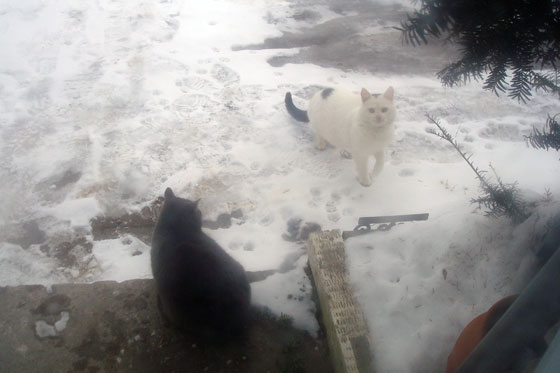 Two cats outside in the snow