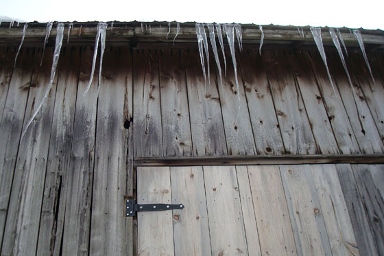 Icicles hanging off the edge of the old barn roof