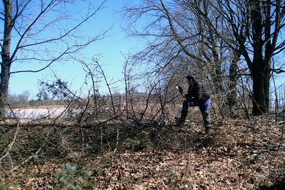 Matt declares victory over the fallen pine tree