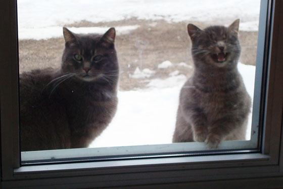 Cats on the windowsill