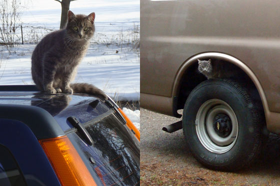 Cat sitting on a truck tire