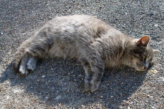 Kitten laying on a gravel driveway