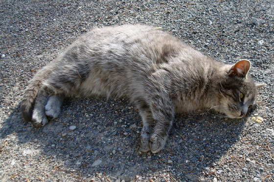 Kitten laying on a gravel driveway