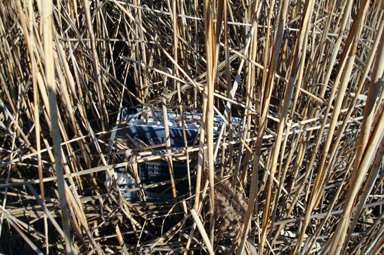 Garbage in a marsh