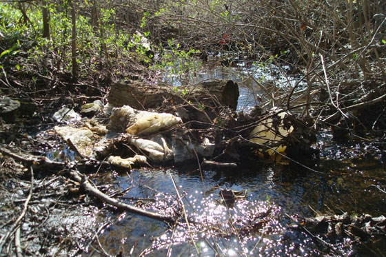 Plastic garbage damming a creek
