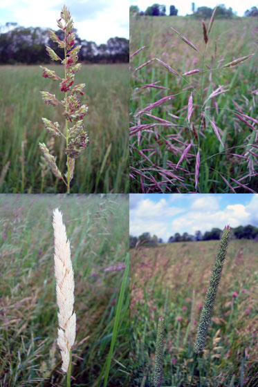 Grasses that make up hay