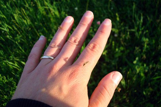 Mosquitoes biting my hand