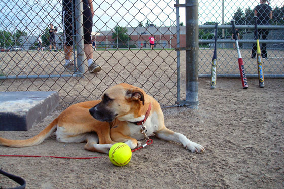 Dog at a baseball diamond