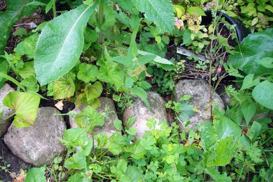 Rocks edging a weedy garden