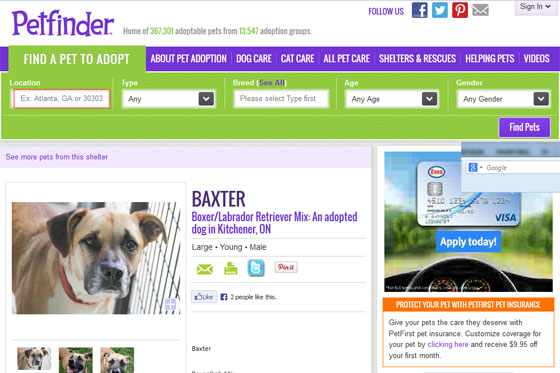 weeks baxter lived with his foster family which included other dogs