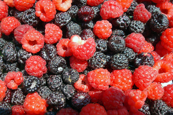 Black and red raspberries