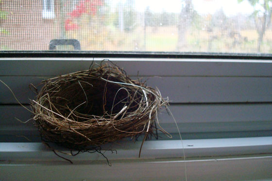 Birds nest made of grass