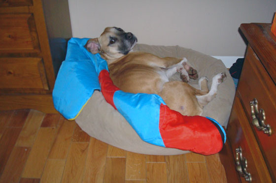 Dog asleeep in a dog bed