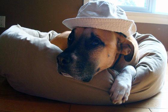 Baxter wearing a hat