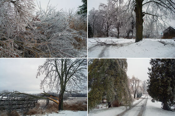 Ice storm collage
