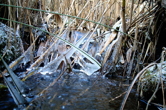Ice covered grasses over a flowing creek