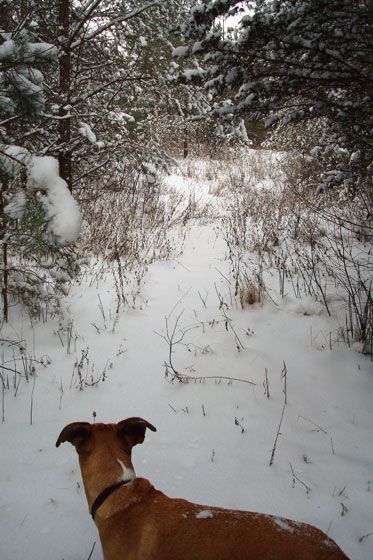Hiking through snowy woods with the dog