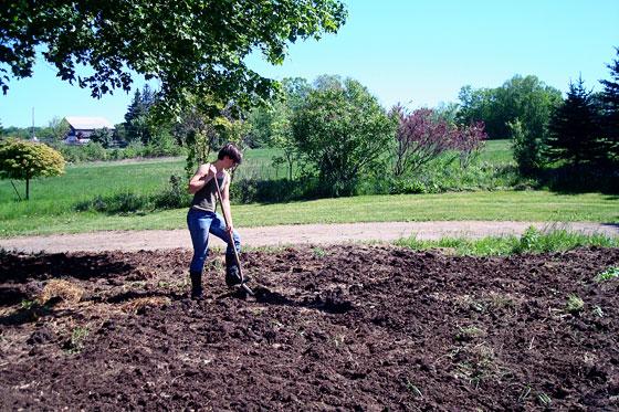 Mixing manure into a garden