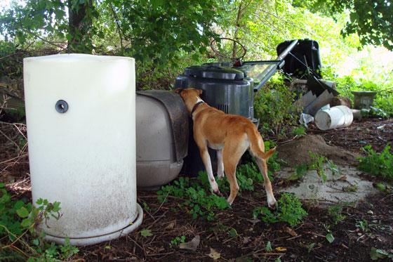 Baxter investigates our junk pile