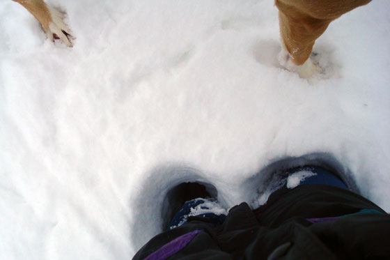 Standing in a snow drift up to my thighs_