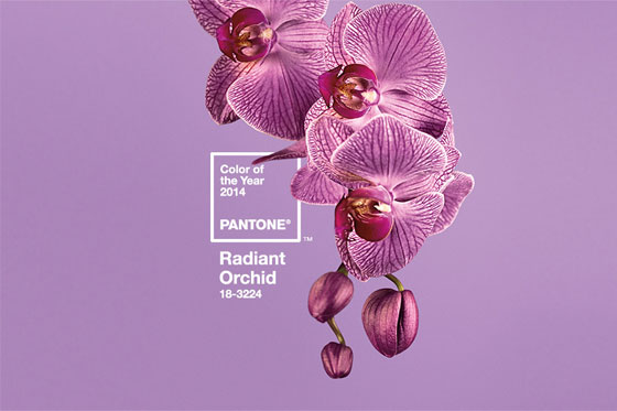 Pantone Colour of the Year 2014 Radiant Orchid