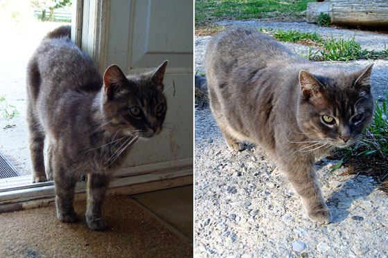 Skinny cat to fat cat