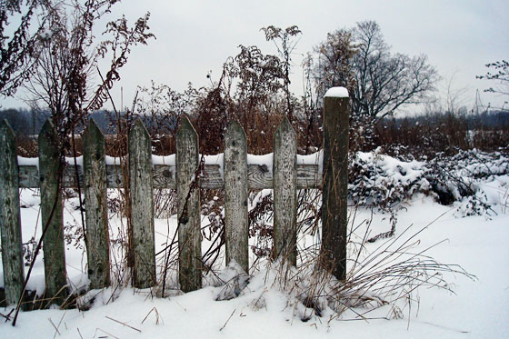 Weathered picket fence in winter snow