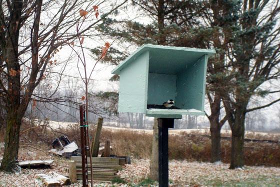 Chickadee at the bird feeder