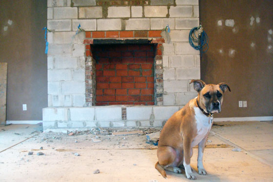 Baxter posing during the fireplace reno