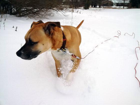 snowshoeing1